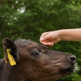 Kind auf Bauernhof Domäne Fredeburg