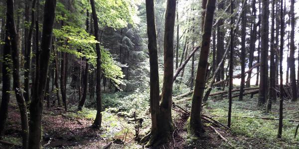 Reinthaler Moor