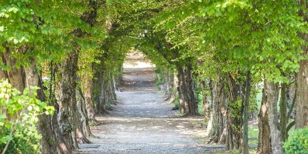 Allee im Schlosspark Pöllau