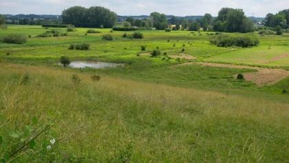 Blick aufs Hepbacher-Leimbacher Ried
