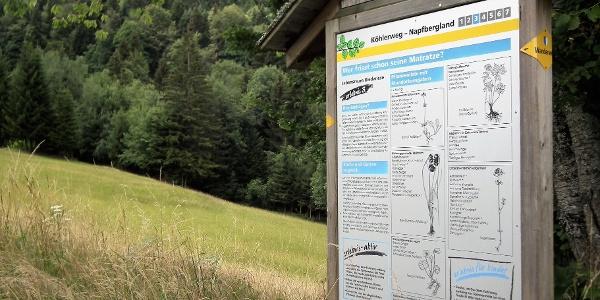 Auf den Infotafeln finden Sie viel Wissenswertes rund um den Köhlerweg und die Landschaft in Romoos