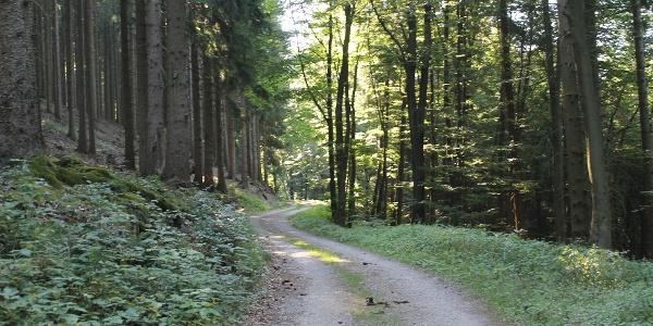 Weg Richtung Langer Berg