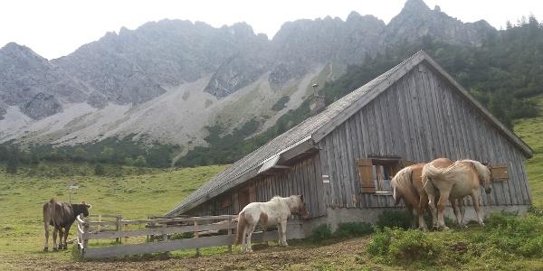 Almhütte mit Pferden vor dem Galinagrat.