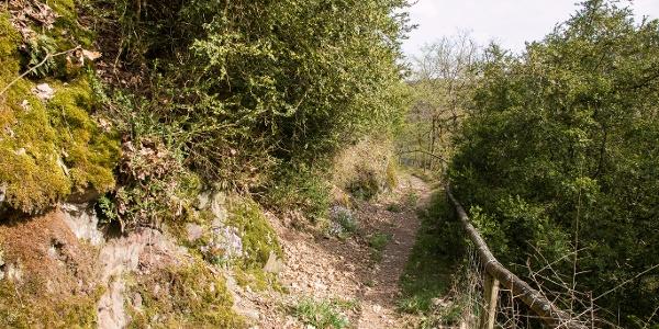 Unterwegs auf schmalen Pfaden_Vulkaneifel-Pfad: Maare-und-Thermen-Pfad: Etappe 2: Lutzerath - Bad Bertrich