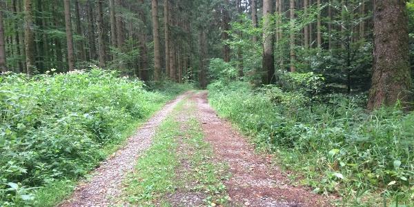 durch den Osterwald