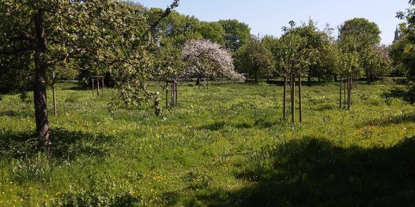 Apfelwiese