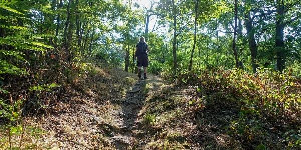 Aufsteigender Waldpfad auf der Wanderung nach Labaroche