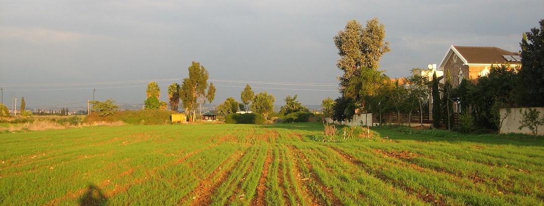 שדות בכניסה לנווה ירק