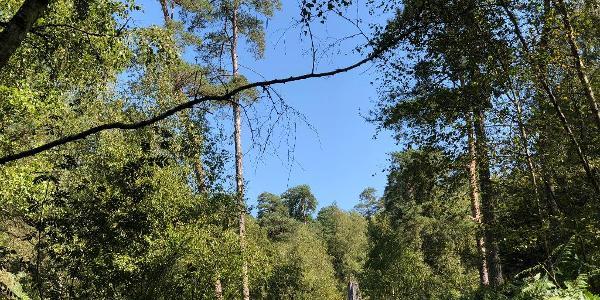 Woodland close to Les Vaux de Cernay