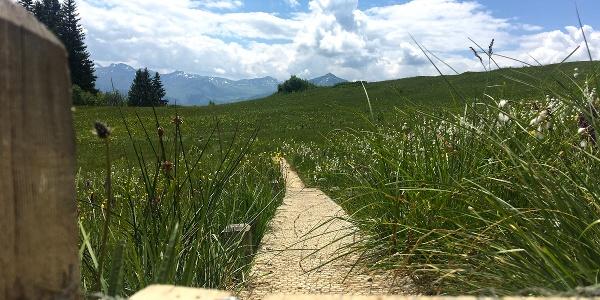 Der Steg hilft dem Wanderer und der Natur!