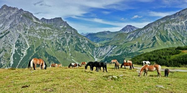 Das Almgebiet der Stubner Alpe