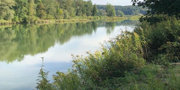Donau-Altwasser