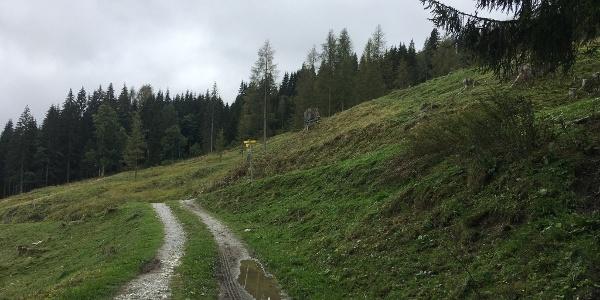 """0.90 km - Am Wegweiser schräg nach hinten rechts abbiegen und bergauf gehen (""""Rauchkögerl"""")."""