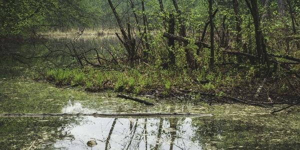 Der Narauner Weiher mit seiner schwimmenden, baumbewachsenen Insel sorgt für ein zusätzliches, ganz besonderes Schauspiel