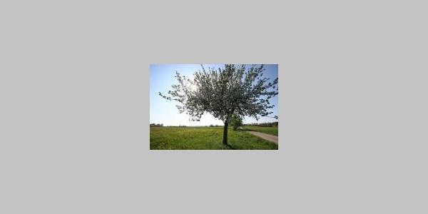 Baum im Frühling_Internet
