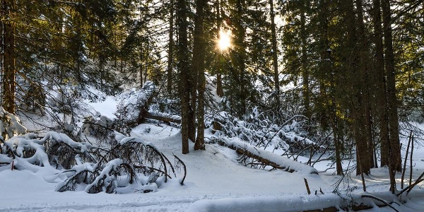 Duch verschneiten Wald hinauf zum Hirschkaser