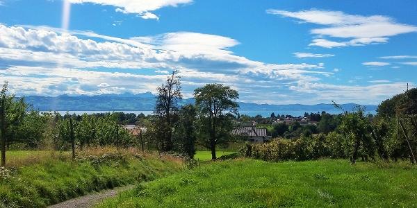 Blick von Bettnau zum Bodensee und Säntis