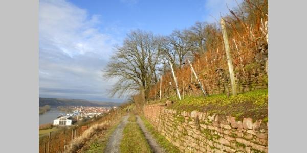 Weinbergsweg Erlenbach