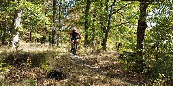 Trauf-Trail