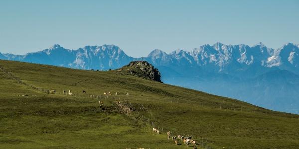 Großer Sauofen mit Blick Steiner Alpen