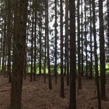 Waldstück zwischen Marktredwitz und Bad Alexandersbad
