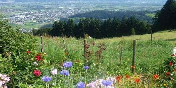 Blick vom Freienland