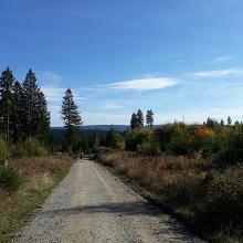 Der Weg zur Stempelstelle 128, Huttaler Widerwaage, Entensumpf