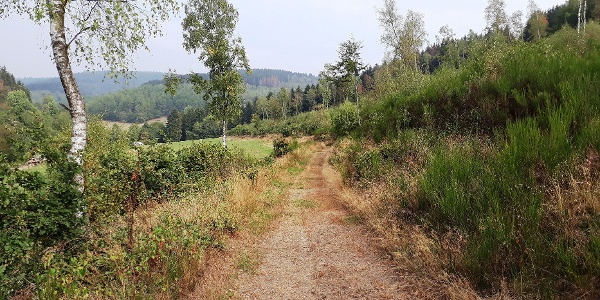 Wandern durch die Hauberge auf dem Köhlerpfad