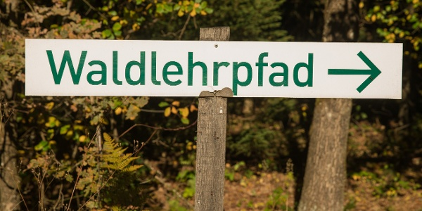 Waldlehrpfad auf dem Tomberg.