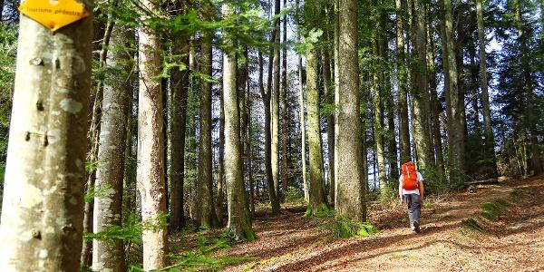 Waldpartie unterhalb Mont Chesau.