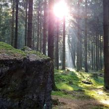 Bunkerreste in einem tollen Wald.