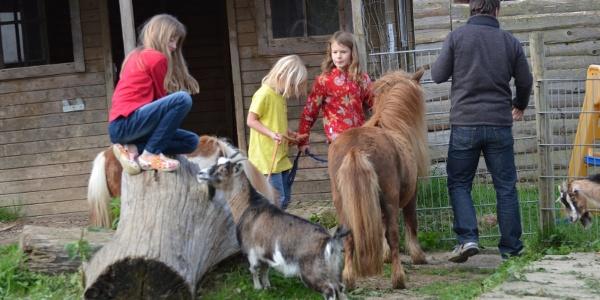 Tiere auf dem Campinghof-Salem