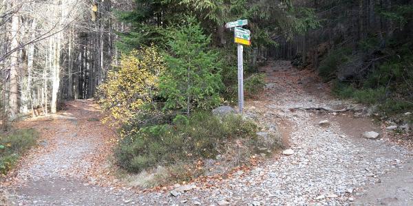Wanderweg 2, links die steinige Variante, rechts normal