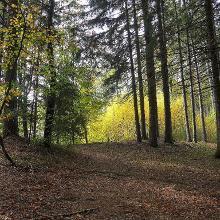 Durch herrliche Waldreviere geht es entlang der Hangkante des Inntalabbruchs