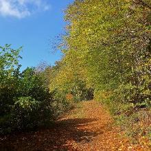 Lauschige Waldwege durch bunten Herbstwald