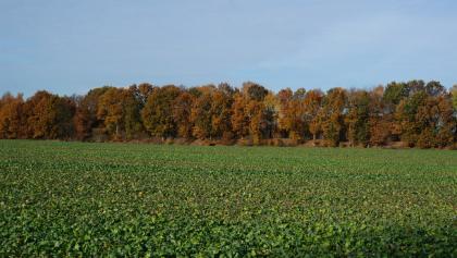 Herbstliche Bäume an der Kettenkamper Straße