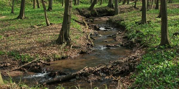 A vadregényes Szuadó völgyében