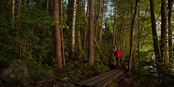 Karkalin luonnonpuisto kesäiltana