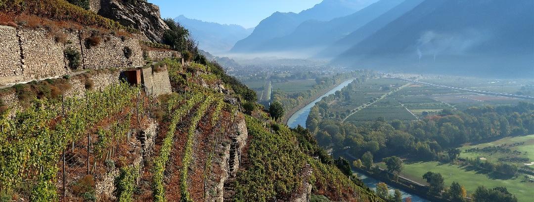 Vineyards near Sion