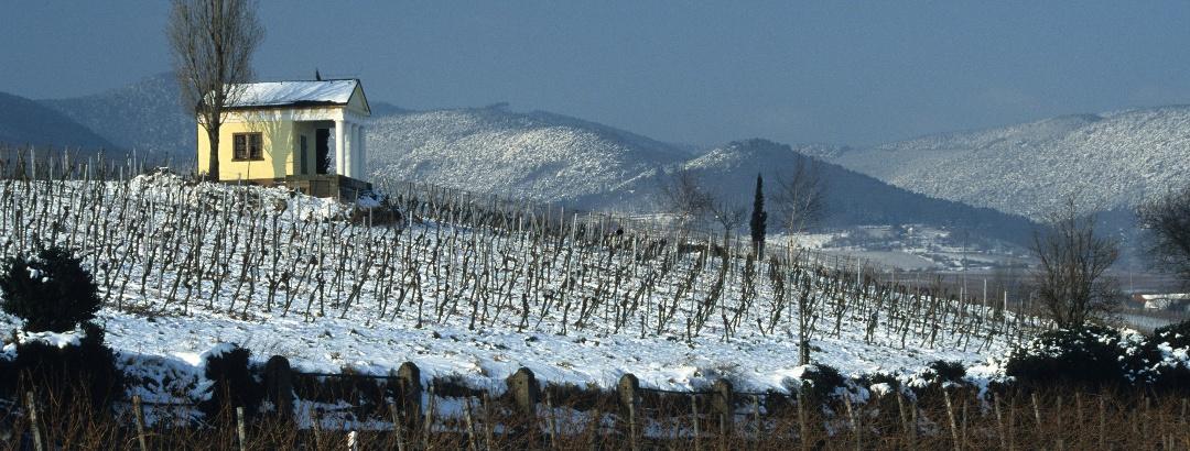 Winterlandschaft Südliche Weinstraße