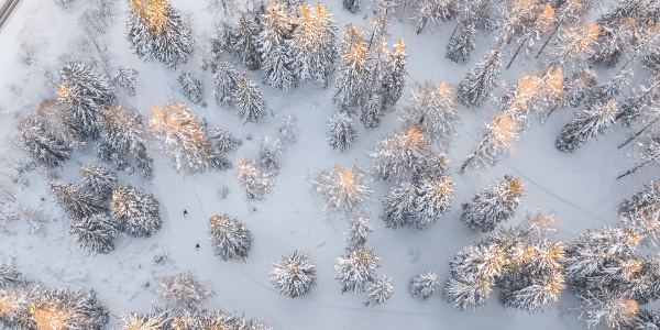 Waldloipe in der Oberwalder Piische