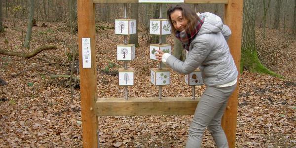 Baumrätsel am Walderlebnispfad Wennigsen