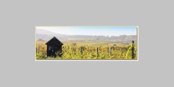Weingärten (Copyright: http://www.farmer-nowak.at)