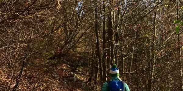 Začetna stezica skozi gozd