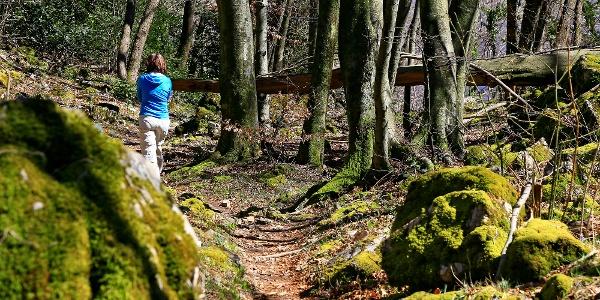 Schöne Waldwege am Monte San Giorgio.