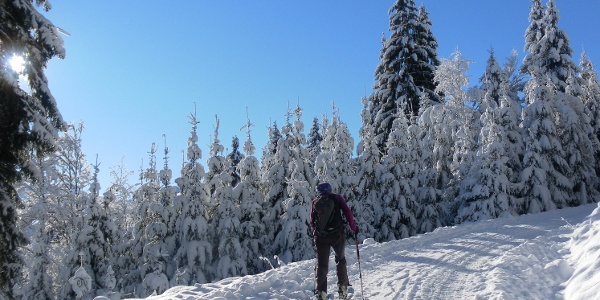 Forstweg zur Bergstation