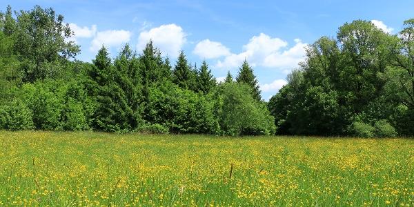 A nyaranta virágos Sás-völgy