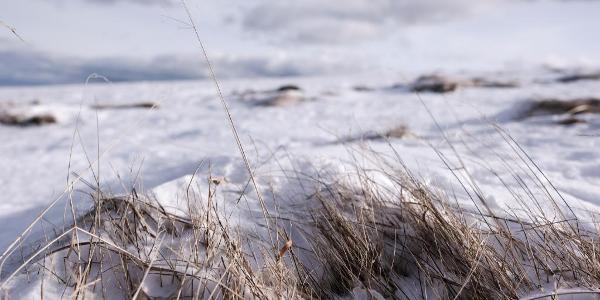 Das ist kaltes Gras. Was macht es? Es ist kalt.