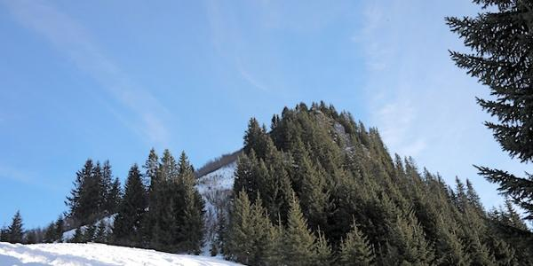 Der Gipfel vom Alpfkopf ist zu sehen. foto (c) kinderoutdoor.de