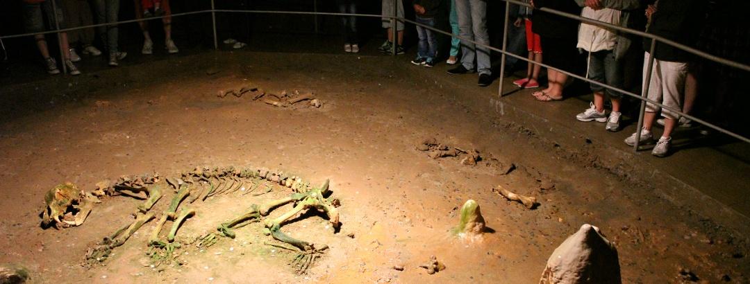 Skeleton of the Cave Bear (Ursus spelaeus) in Bears' Cave